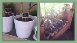 le piante com'erano