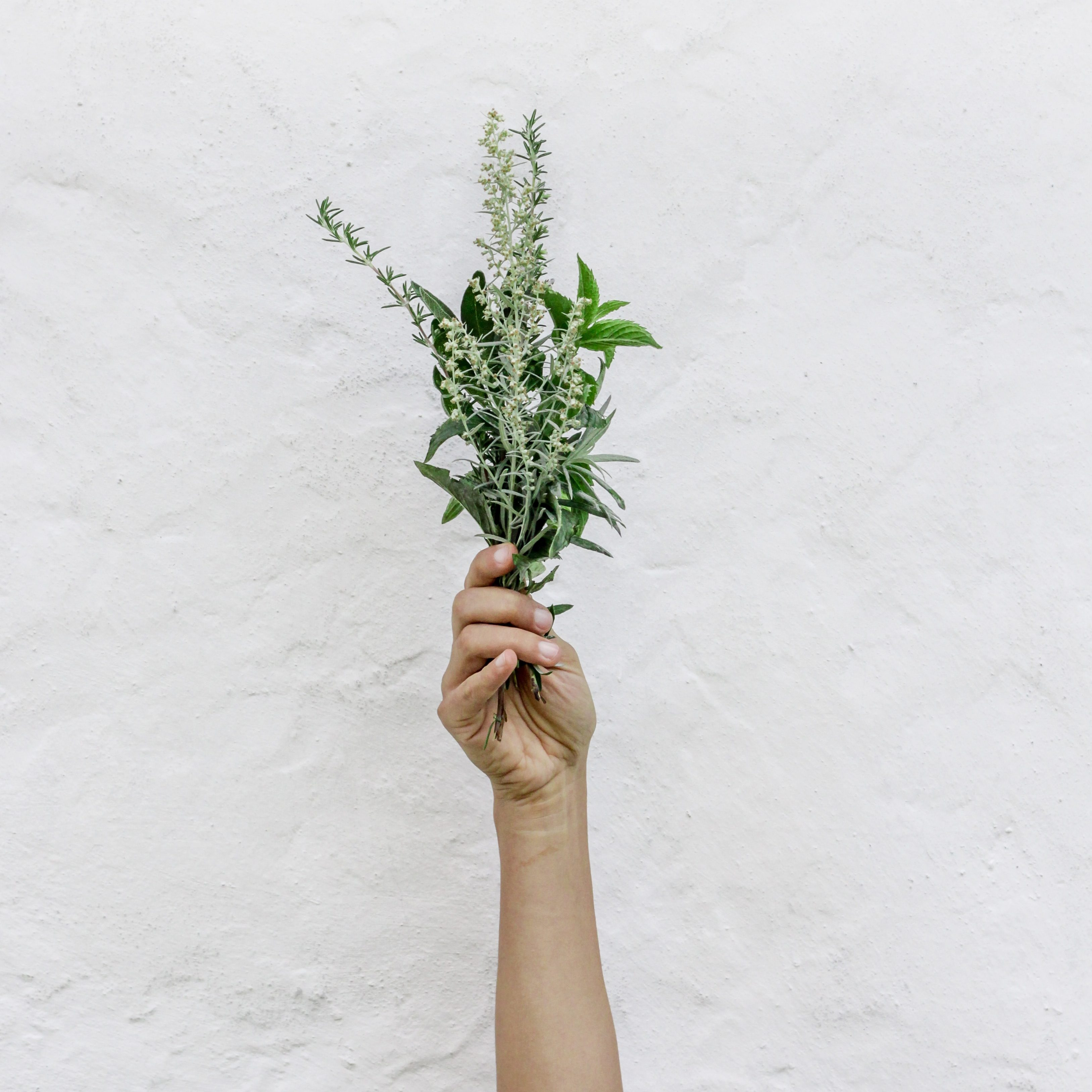 cucinare con le erbe aromatiche
